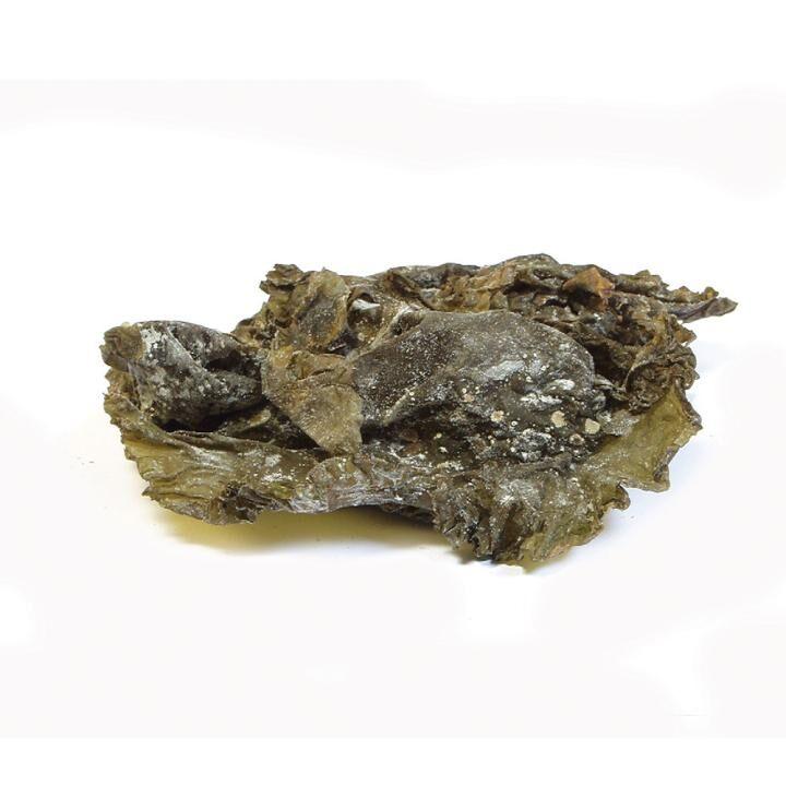 alge_kombu