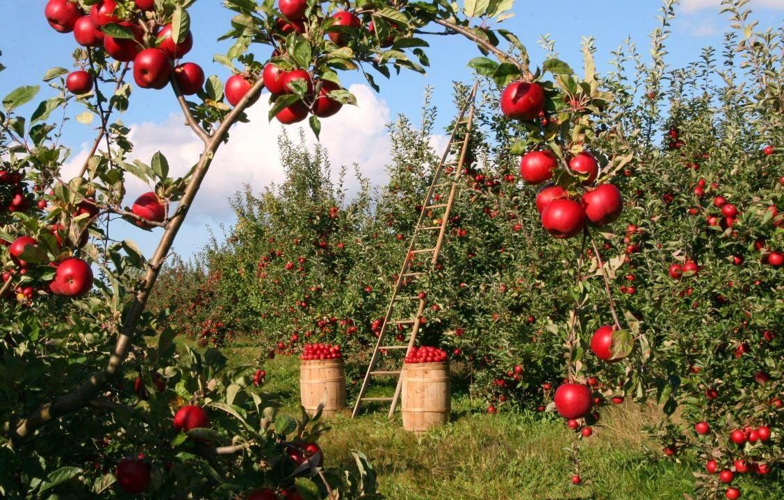 Die gesundheitlichen Vorteile von Bio-Lebensmitteln