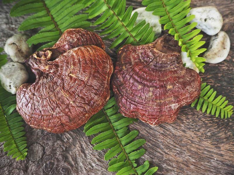 Reishi Pilz Pulver - Wirkung, Verwendung, Inhaltsstoffe und Nährwerte