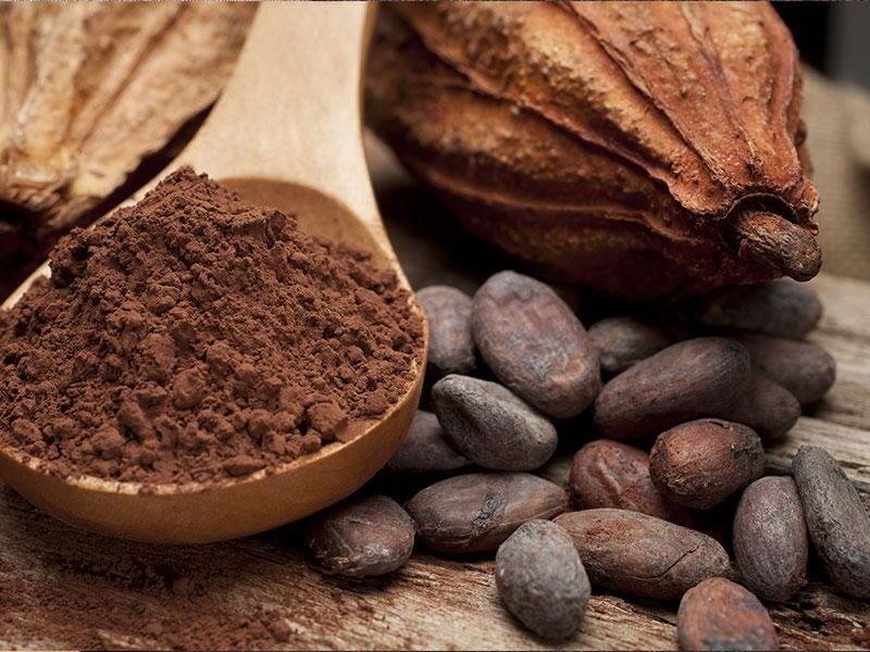 Kakaobohnen - Verwendung, Inhaltsstoffe und Nährwerte